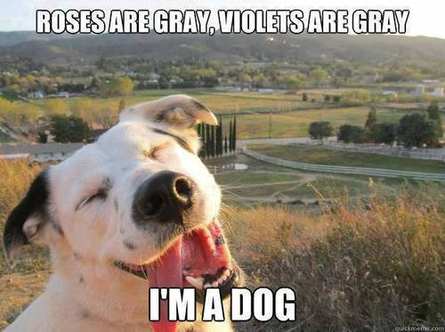 Episode 85 – Roses Are Grey. Violets are Grey. I Am a Dog. | we ...